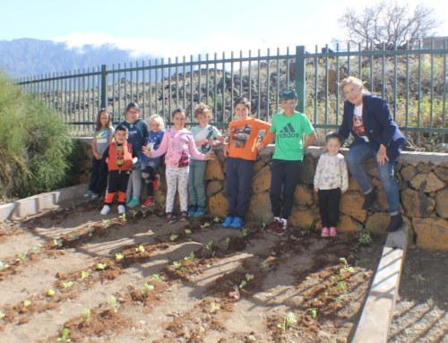 El Ayuntamiento de El Paso crea nuevos huertos escolares para acercar la Educación Ambiental a todos los centros educativos del municipio